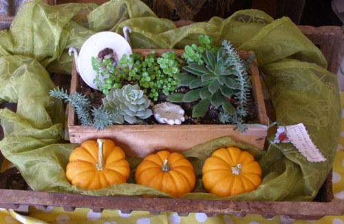 Simple wooden box planted with succulents and placed in a fireplace grate