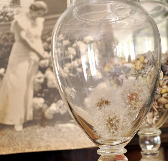 Dandelion puffs in an apothecary jar : Just Vintage Home
