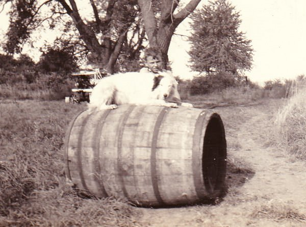 Vintage photo of a dog on a barrel with his boy standing nearby