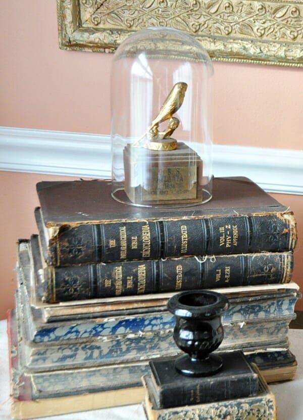 Vintage parakeet trophy under a cloche